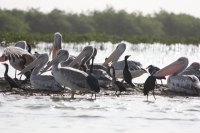 Oiseaux Sine Saloum - Nianing-excursion.com