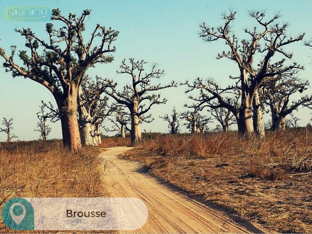 Brousse-Nianing-excursion.com